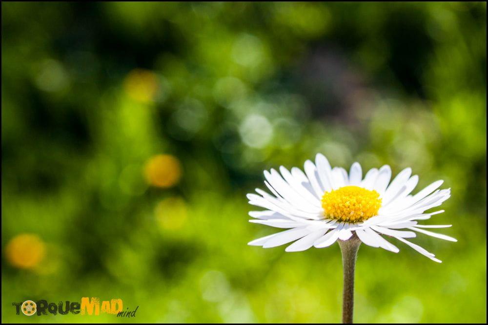 Fotki #43: Wiosennie